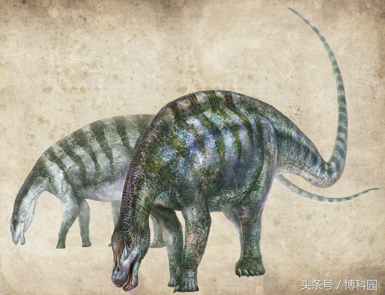"""中国出土的""""神奇龙""""可以追溯到亚洲最早蜥脚类动物"""