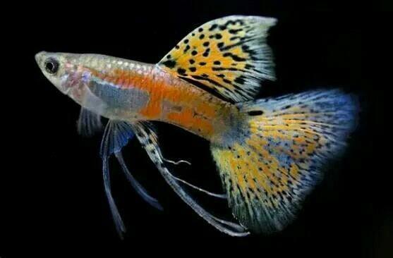 这些极美的水生生物,你见过吗?