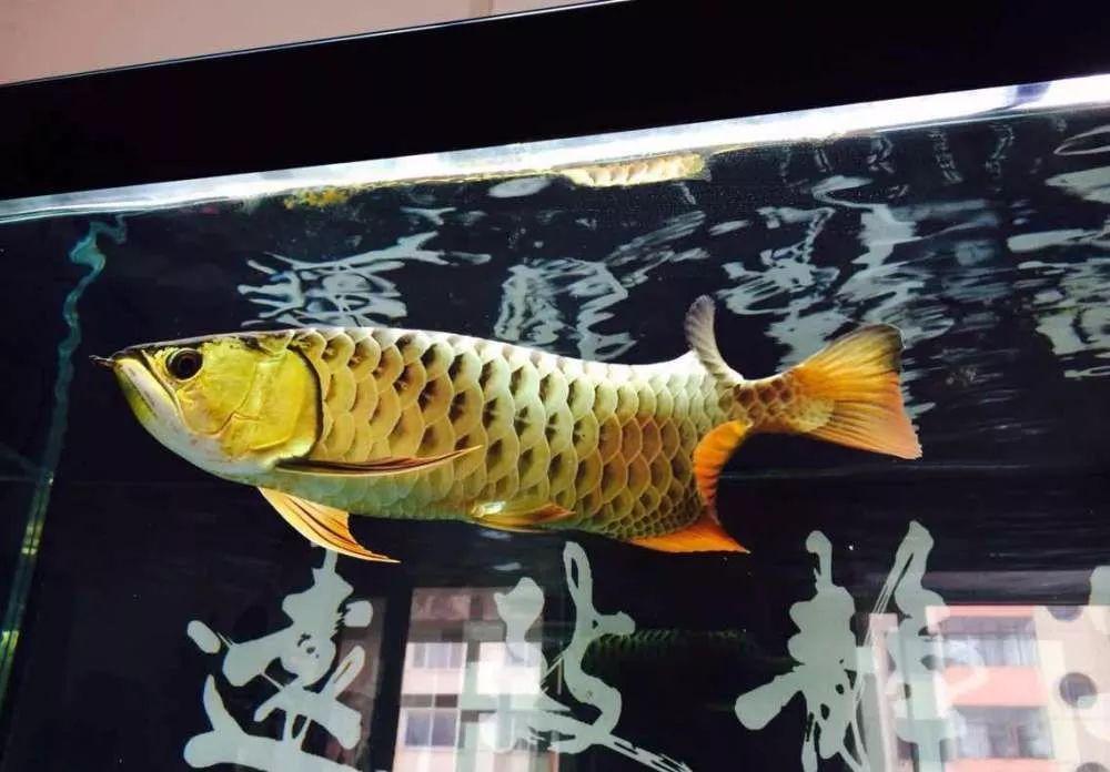 8條超實用風水,告訴你辦公室魚缸如何擺放