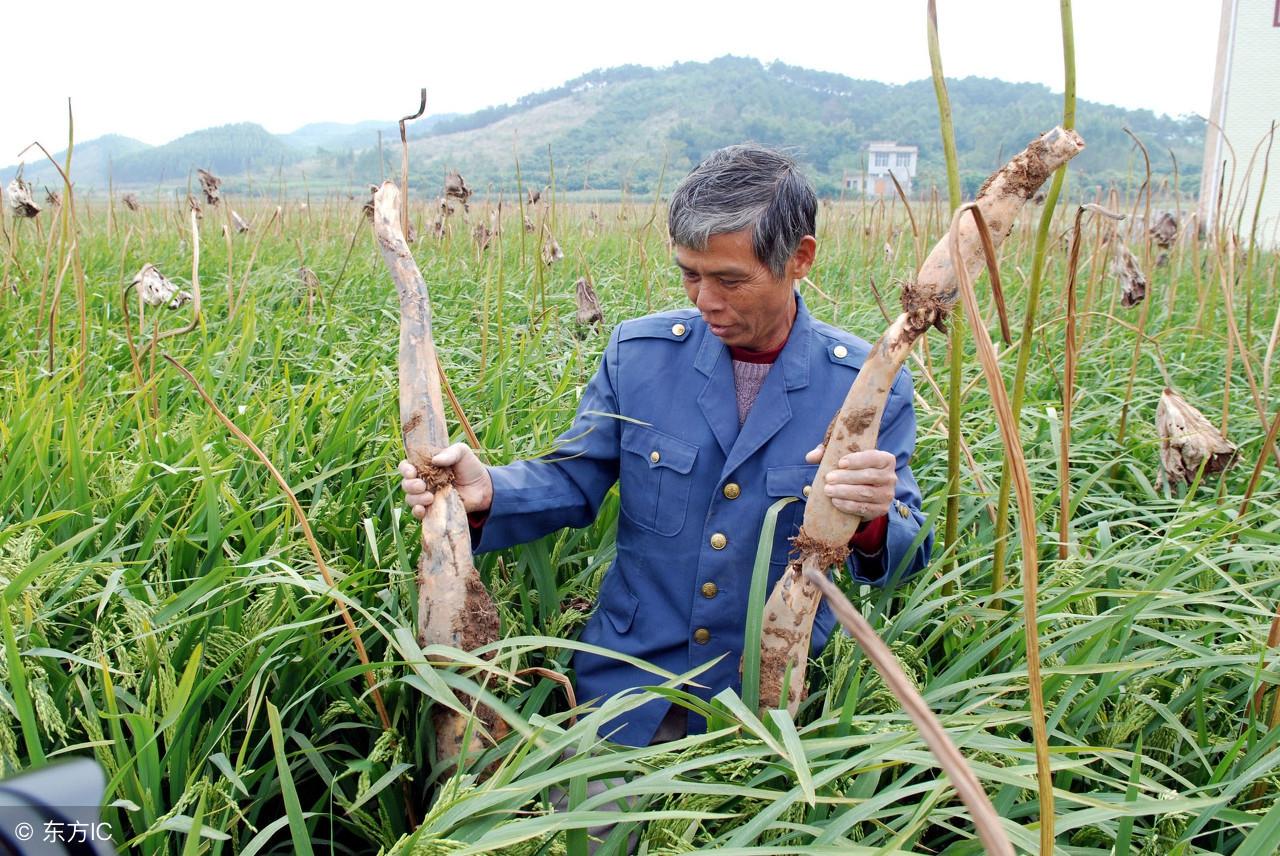 农民怎样种植农作物才能赚到钱呢?