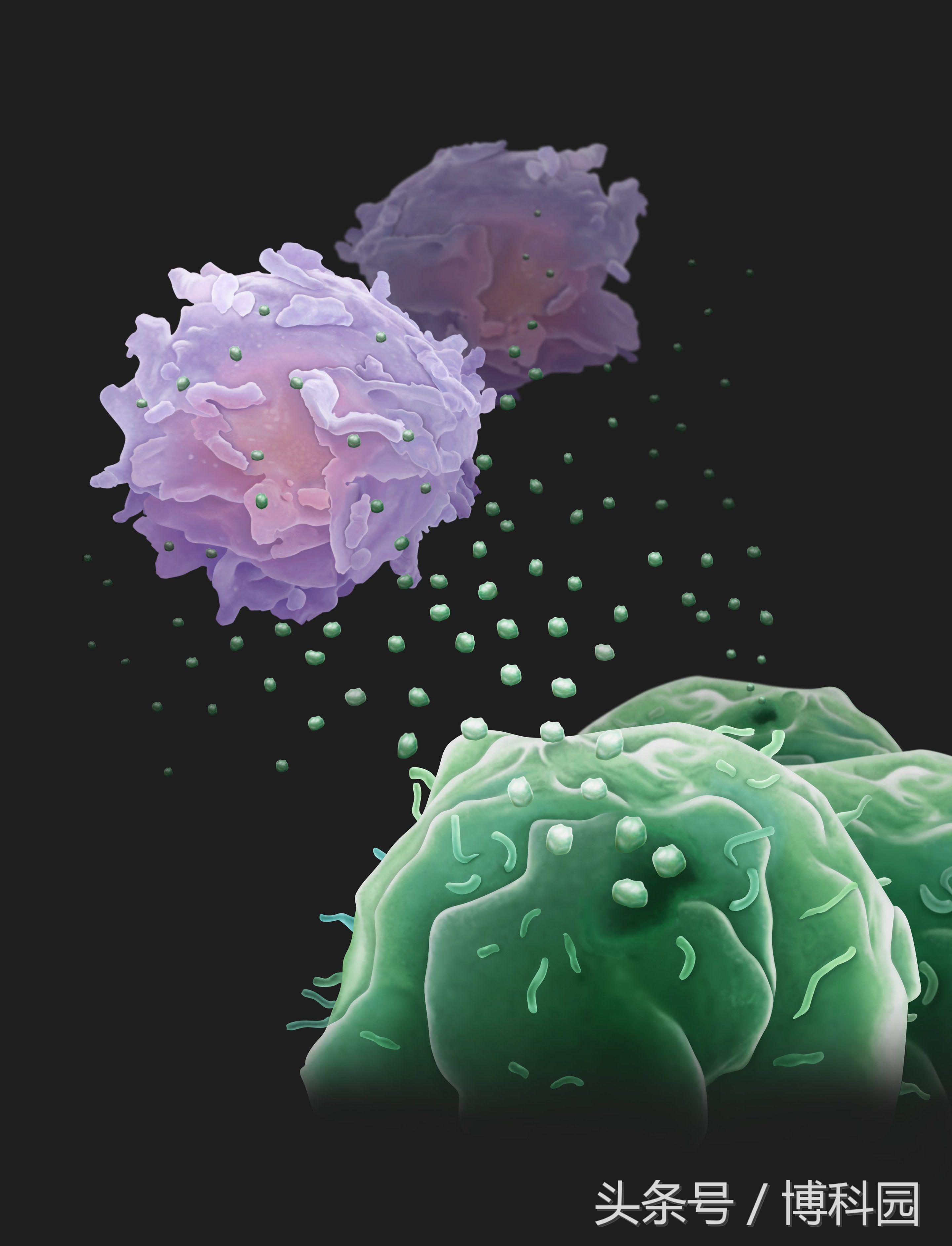 """癌细胞会从远处发射""""无人机""""来对抗免疫系统"""