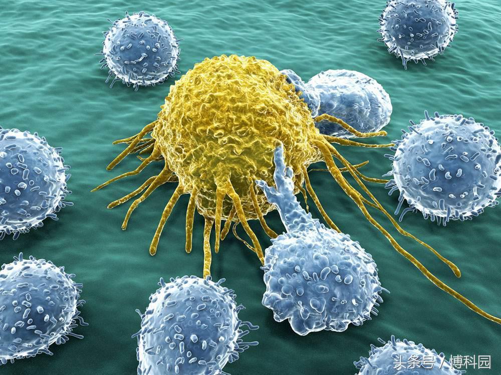 首次研究巨型癌细胞,能带来突破性的治疗?