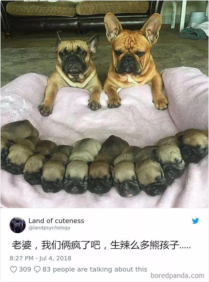 22張搞笑狗狗照:養狗,是我此生最明智的決定!