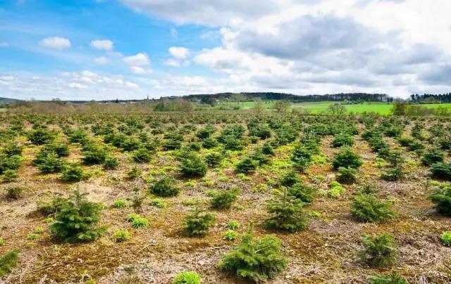 栽树育苗如何提高效率,林业育苗机械来帮忙