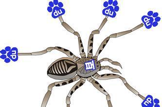 如何正确识别百度蜘蛛Baiduspider,以及真伪检测?