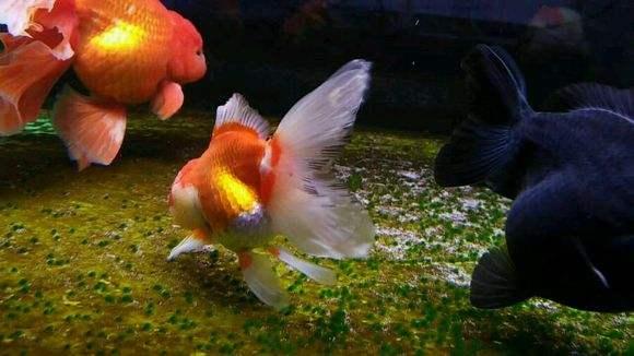 鱼缸养鱼的过滤棉需要经常清洗吗,有很多种情况出现!