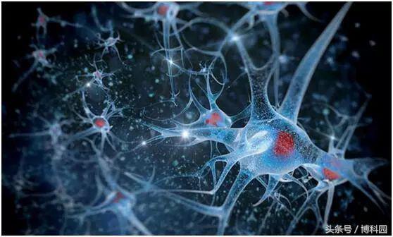 """蛋白质""""贩卖者""""研究揭示对自闭症和大脑疾病的深入了解"""