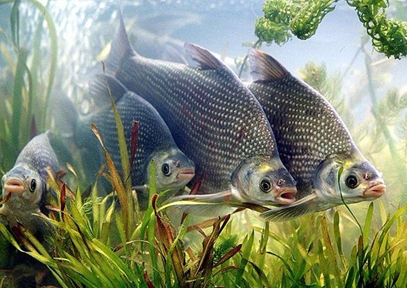 鱼蒸来吃 做出来味道一样好吃 清淡原汁原味 老人小孩都爱吃