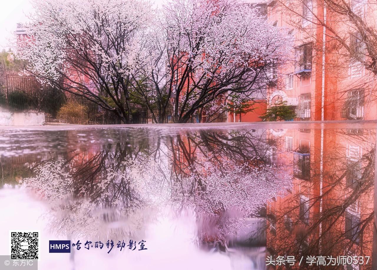 100首重阳节古诗词精选(新编)