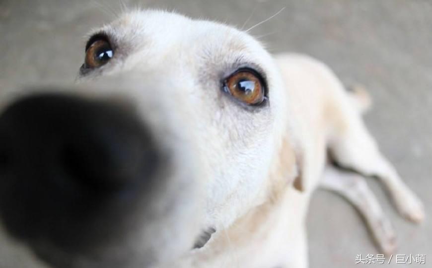 狗狗为什么总是喜欢舔人,这5个原因你看了就懂,这其实是好事