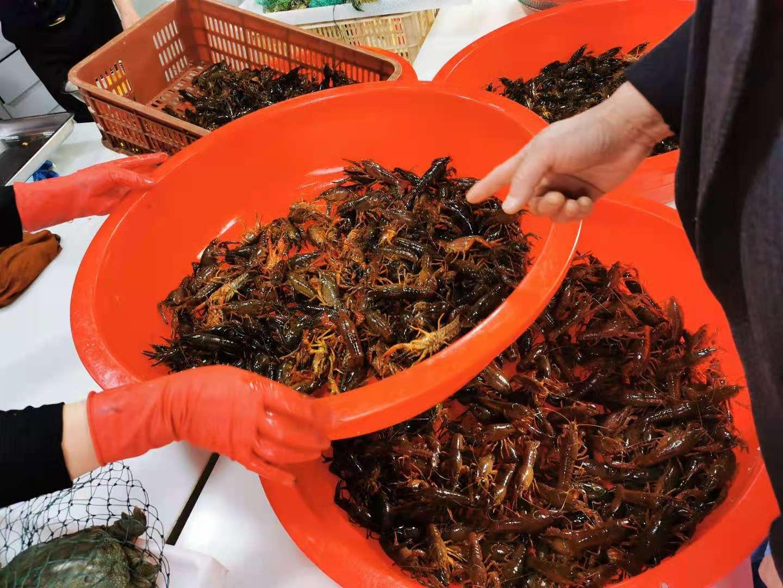 小龙虾用水一煮,鲜味全跑了,学会这一招,虾肉Q弹鲜香,极鲜美