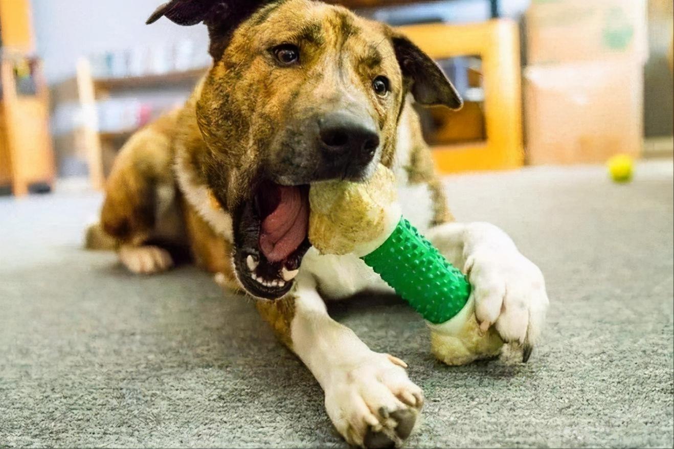 """这6种狗狗最爱的""""玩具"""",既便宜又实惠,你家备上了吗?"""