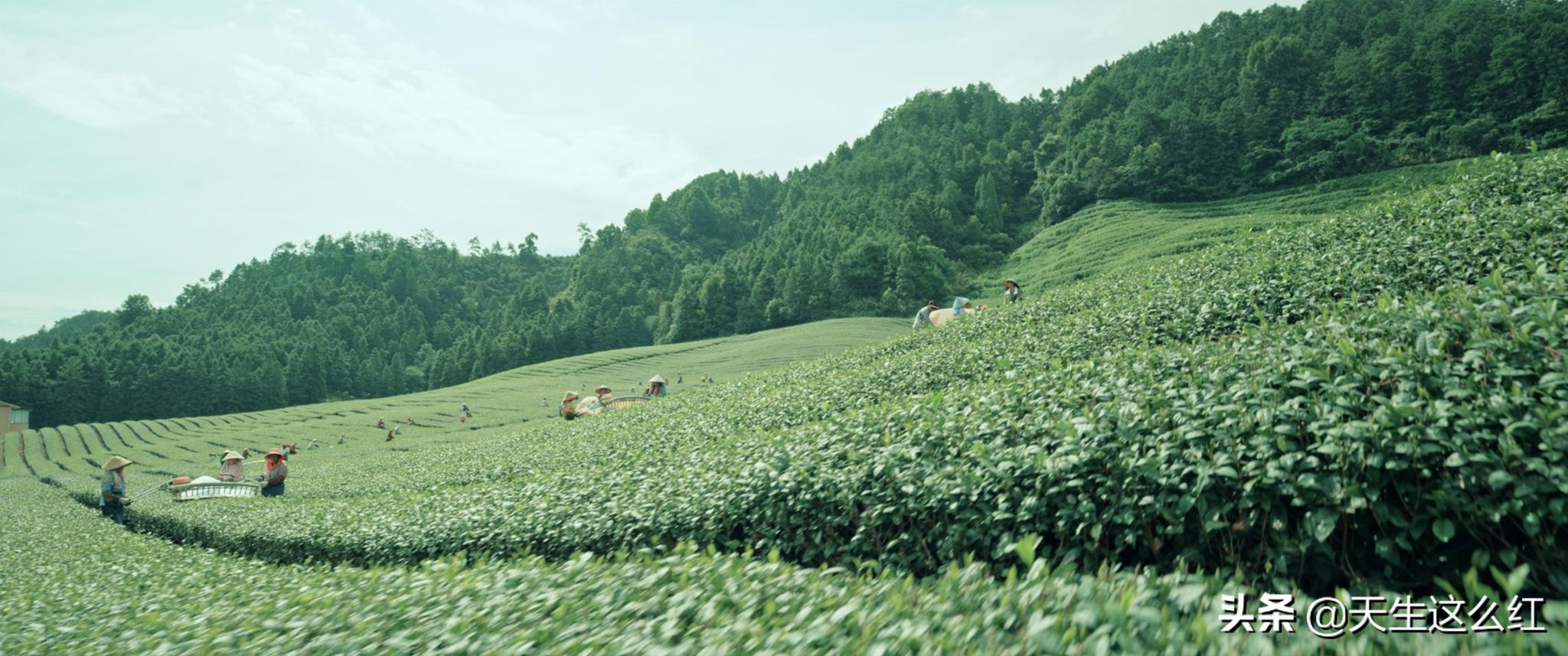 鬼才徐峥+影帝范伟,《我和我的家乡》让我哭得好大声