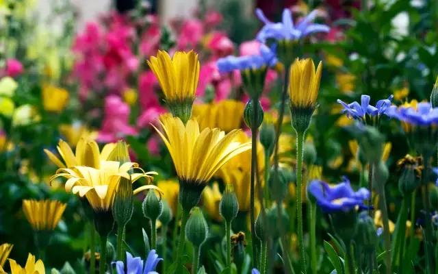 园林人需要知道的85个花卉基本知识点!(建议收
