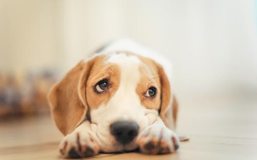 养狗常备这8种药,小病没烦恼,省钱省时省心