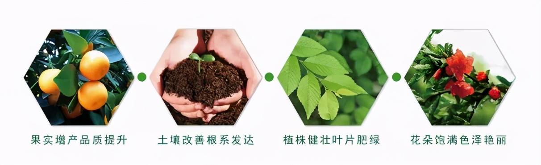 钾肥在农业生产中的重要作用(三)