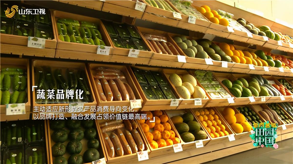 《田园中国》分享蔬菜之乡的成长故事