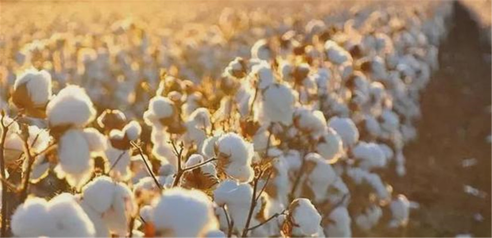 下一个H&M?芬兰企业拒绝对华供应纸浆,中方早就把话挑明