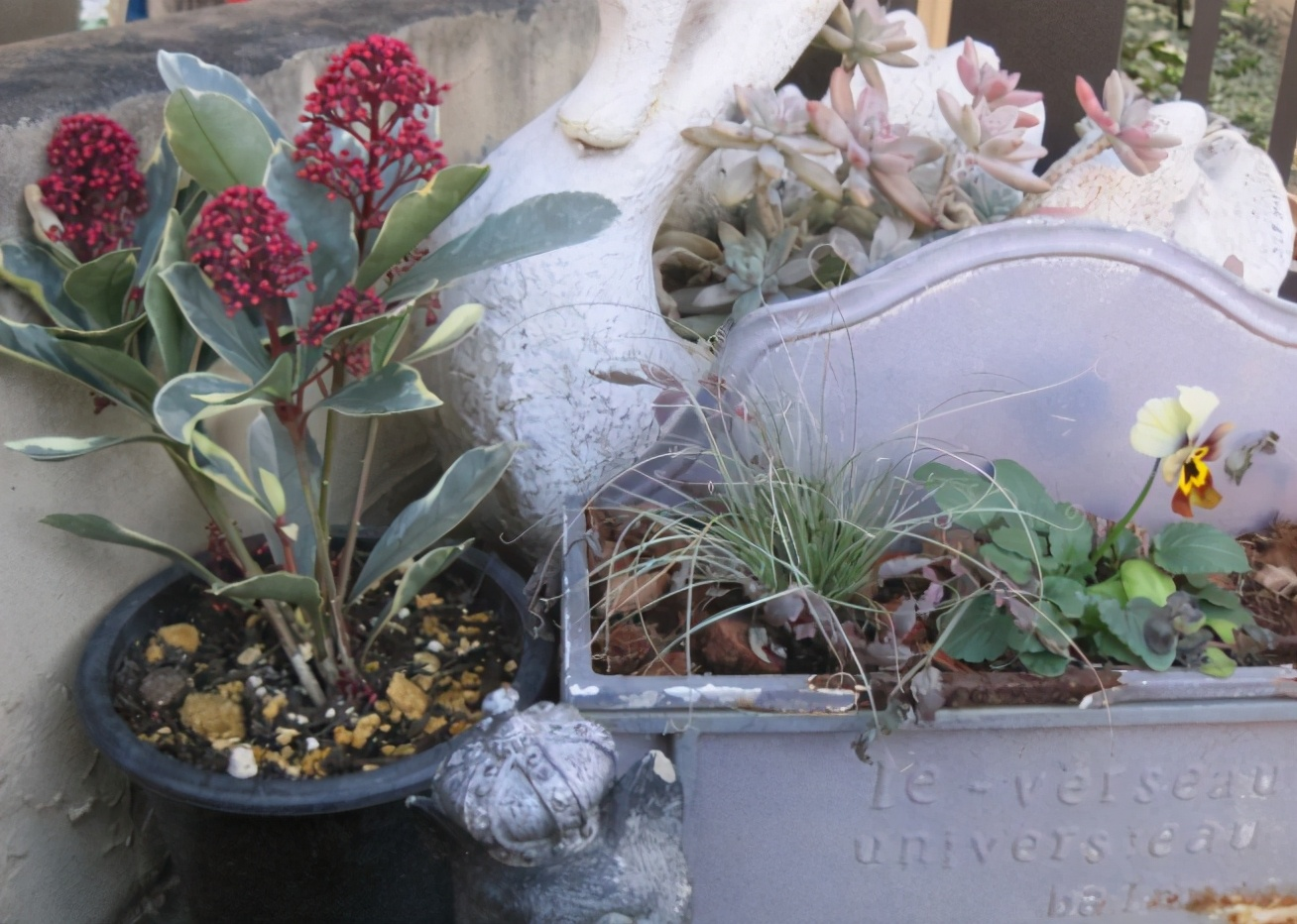 夏天氣溫高,澆花沒有注意這3點,用得越多植物傷亡越多