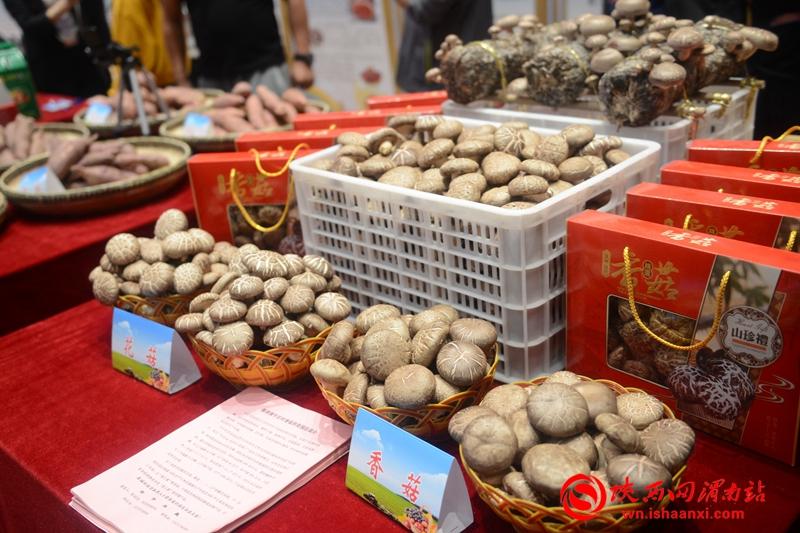 合阳县2020年农民丰收节产销对接会成功举办 签约9个项目 金额达1.2亿元(组图)