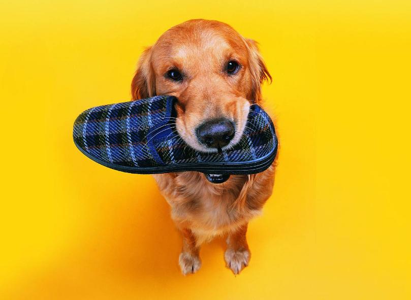 """""""懂事""""的狗狗,都会做这7件事,你家狗有吗?"""