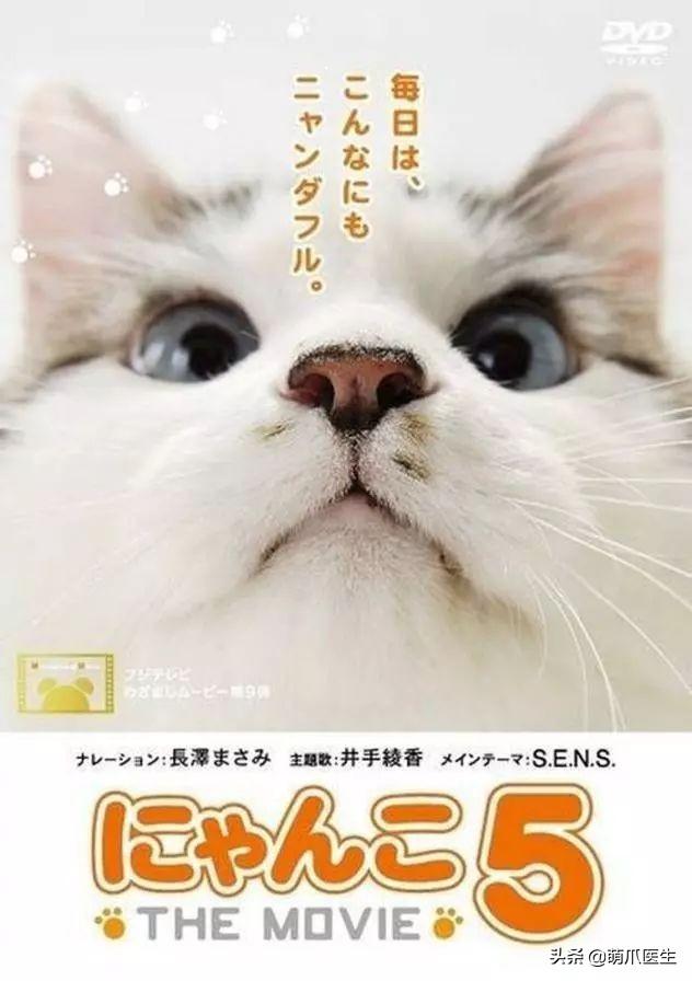 你家猫喜欢看电视吗?