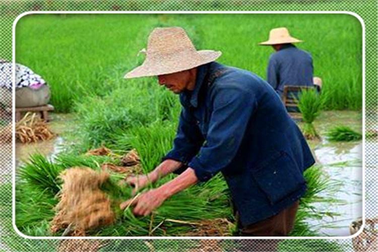 一个42岁的农村人,没有资金自主创业,不打工怎么才能挣到钱?