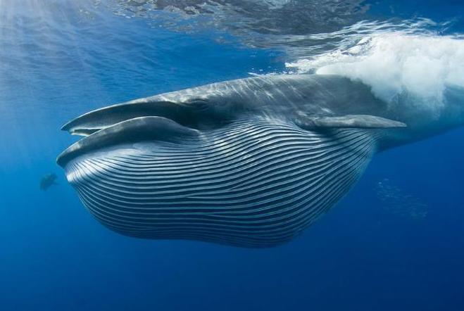 """为什么说""""一鲸落而万物生""""?一条鱼就是一个生态系统"""