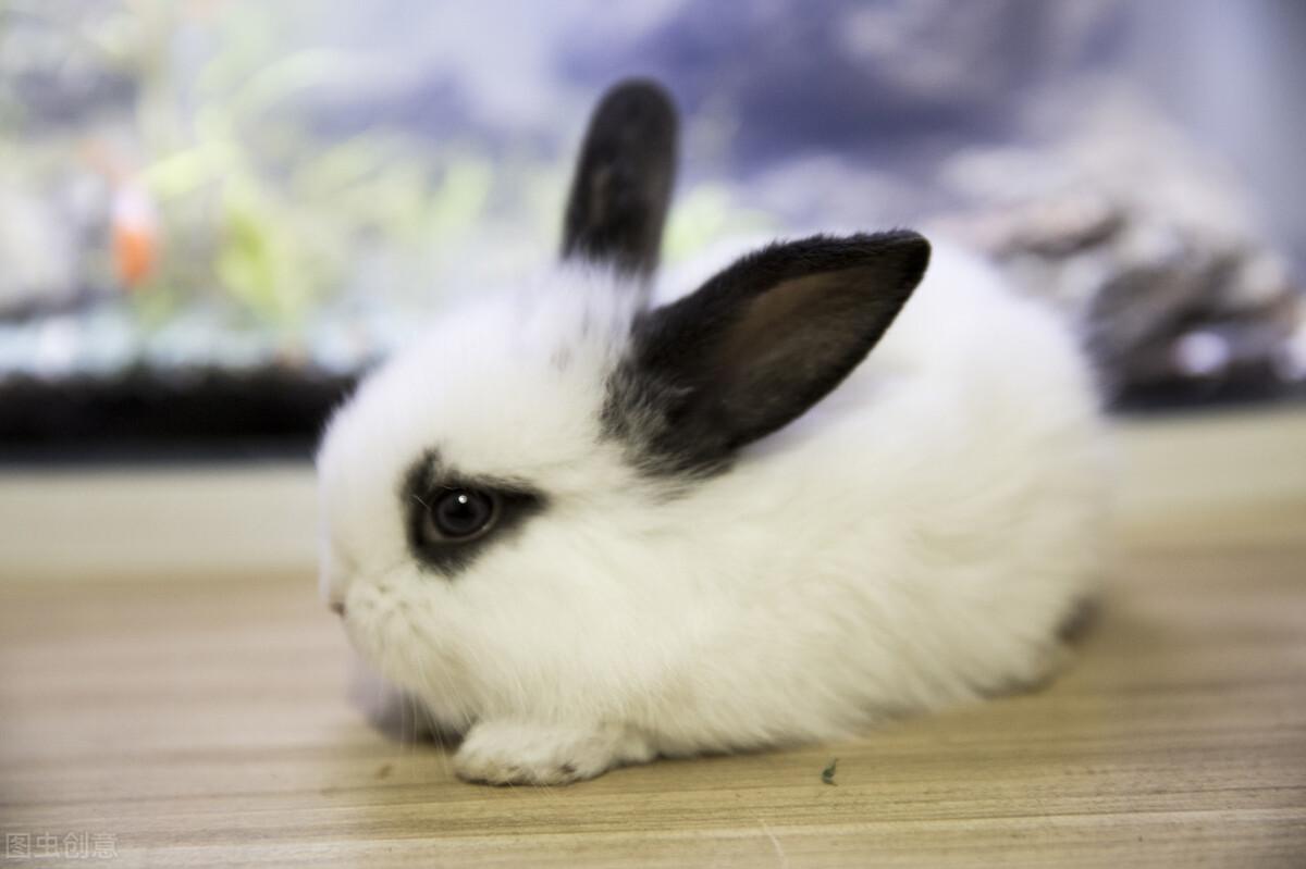 养兔子怎么找销路(合作养兔真回收的有哪家)
