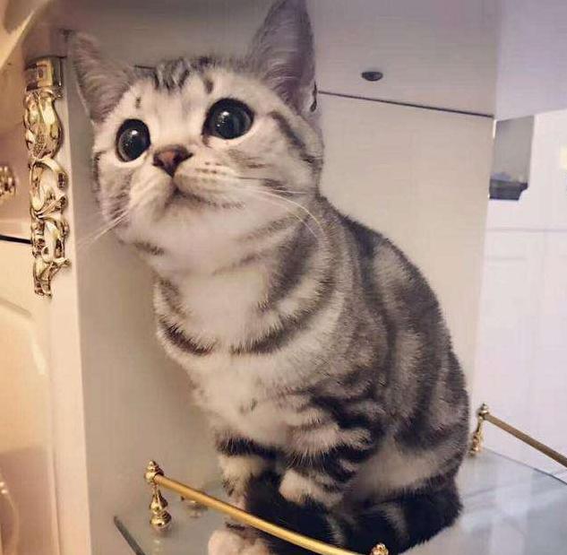 主人出门几天生孩子,回家后猫咪一脸茫然:主人肚子哪去了?