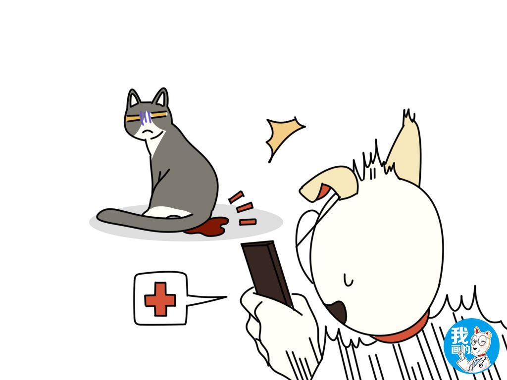 辟謠:貓咪發情也會來例假?出血很可能是身體不適的信號