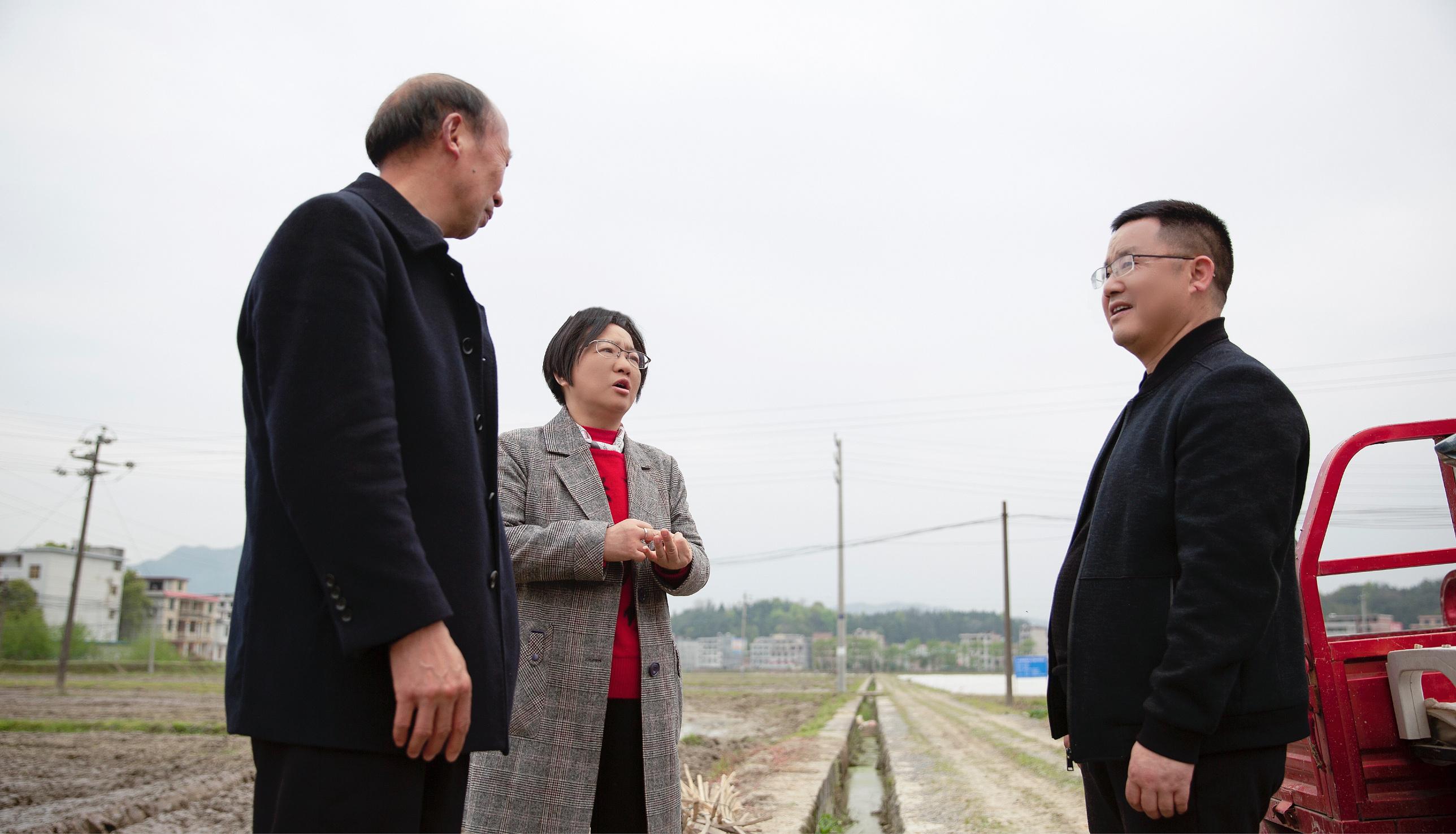 隆回县七江镇千古坳村打响双季稻生产攻坚战