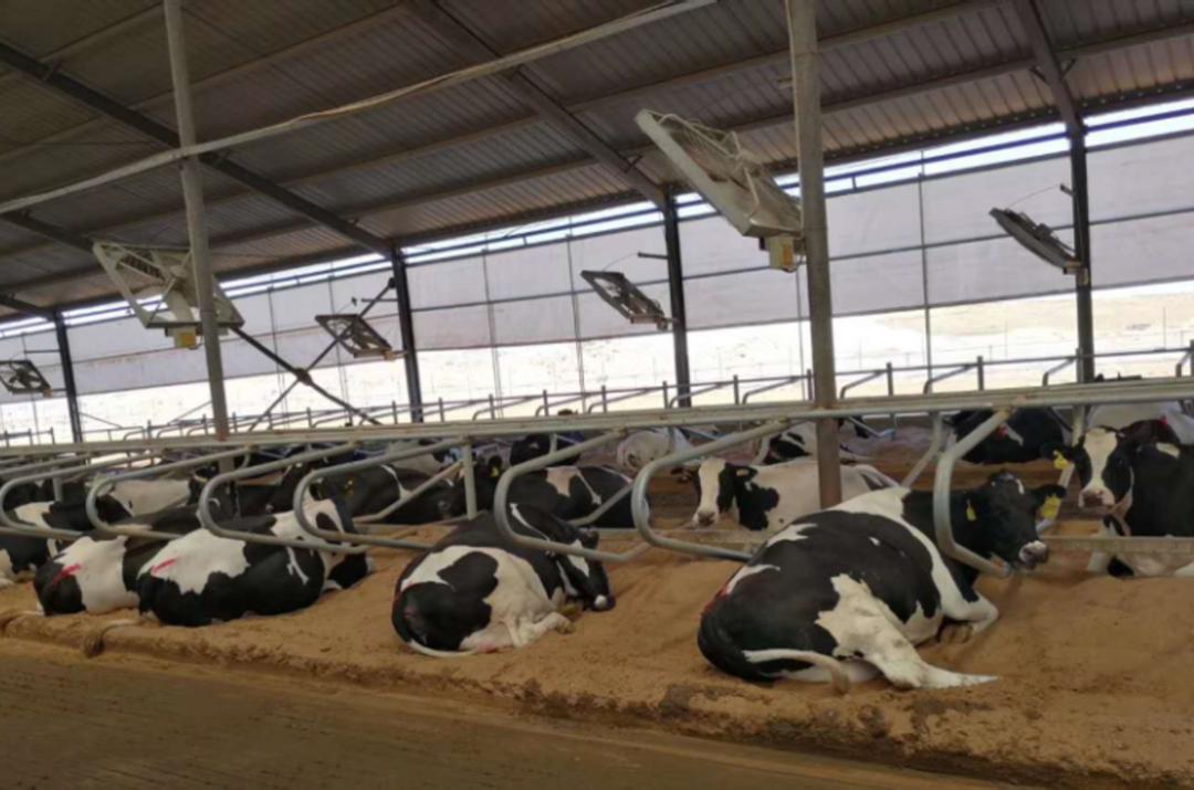 牧场垫料循环创新方案——防疫环保又增收,轻松节省500万