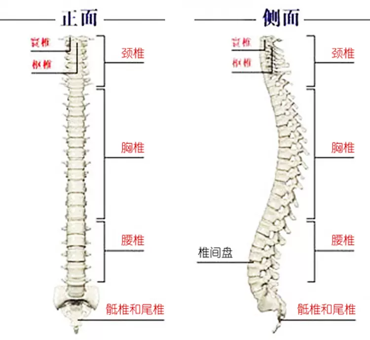 颈椎难受是该换一张苏老伯精细黄麻床垫了