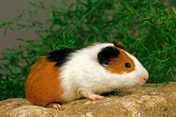 这6种宠物,外表讨喜、价格不贵、养活容易,你不想养一只吗?