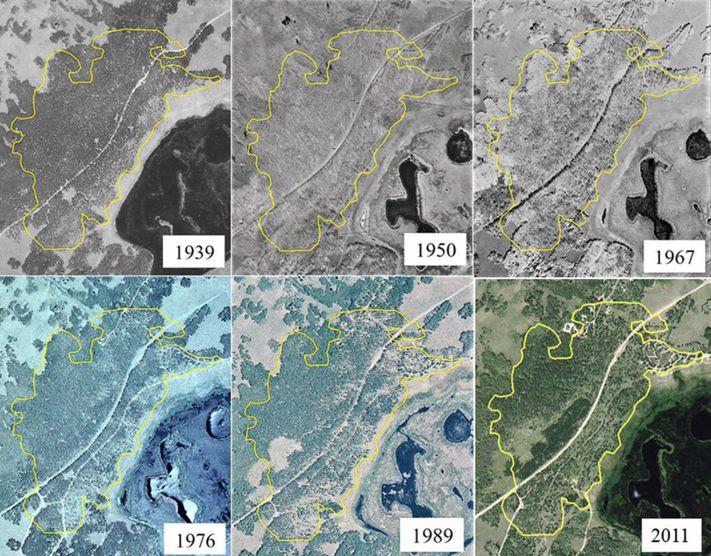 活了80000歲,重量600萬公斤,全球最大生命體正走向死亡