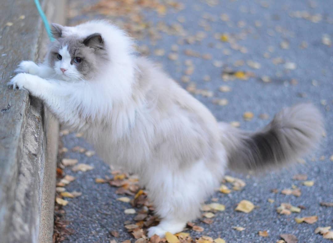 如果你想养一只猫,请先想好这几件事情,再做决定!