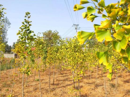 """苗圃产业实现生态和经济效益""""双丰收"""""""