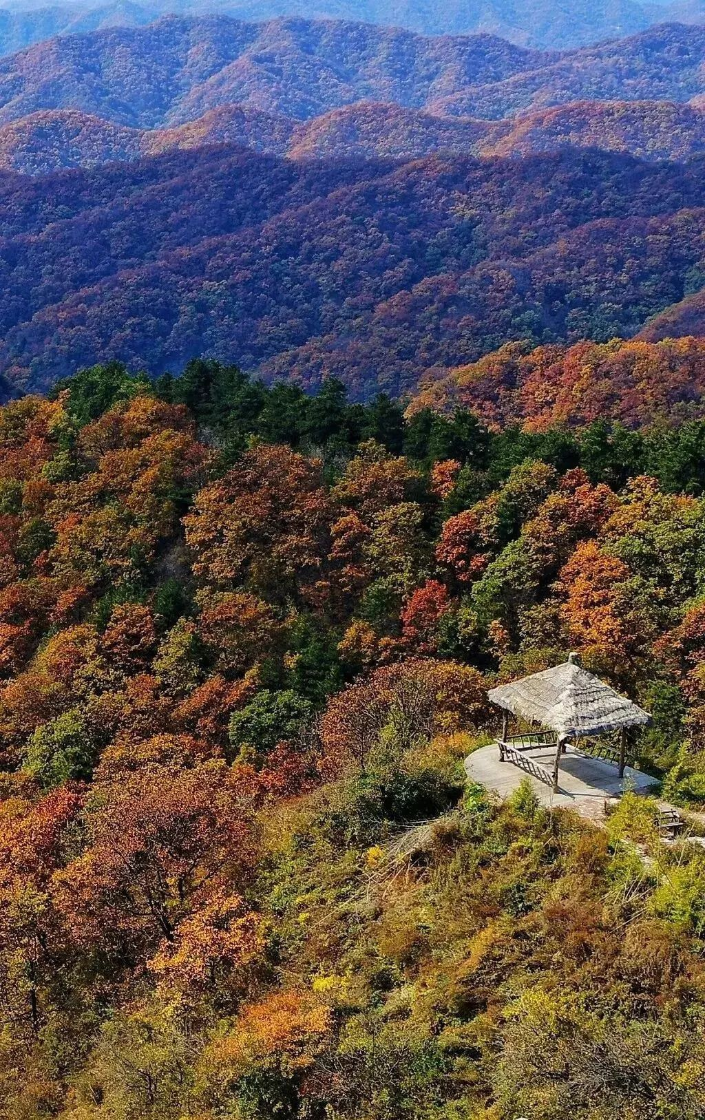 陕西秋天隐藏的秘境天堂,深秋红叶漫山遍野,处处是风光大片