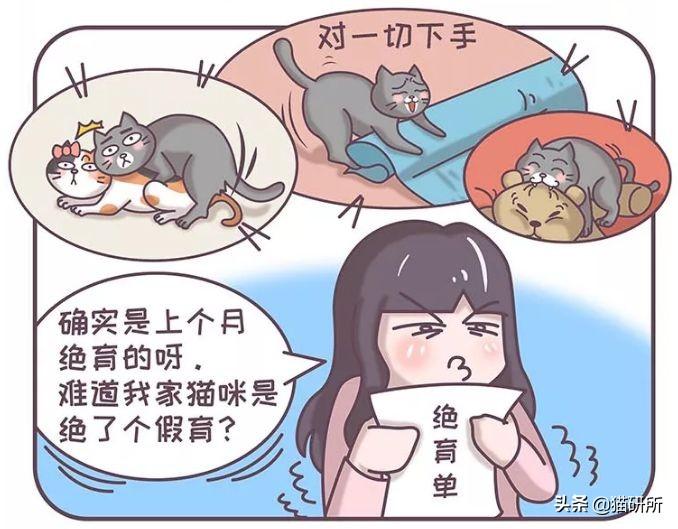明明已經給TA絕育了,貓咪怎麽又雙叒叕發情了?
