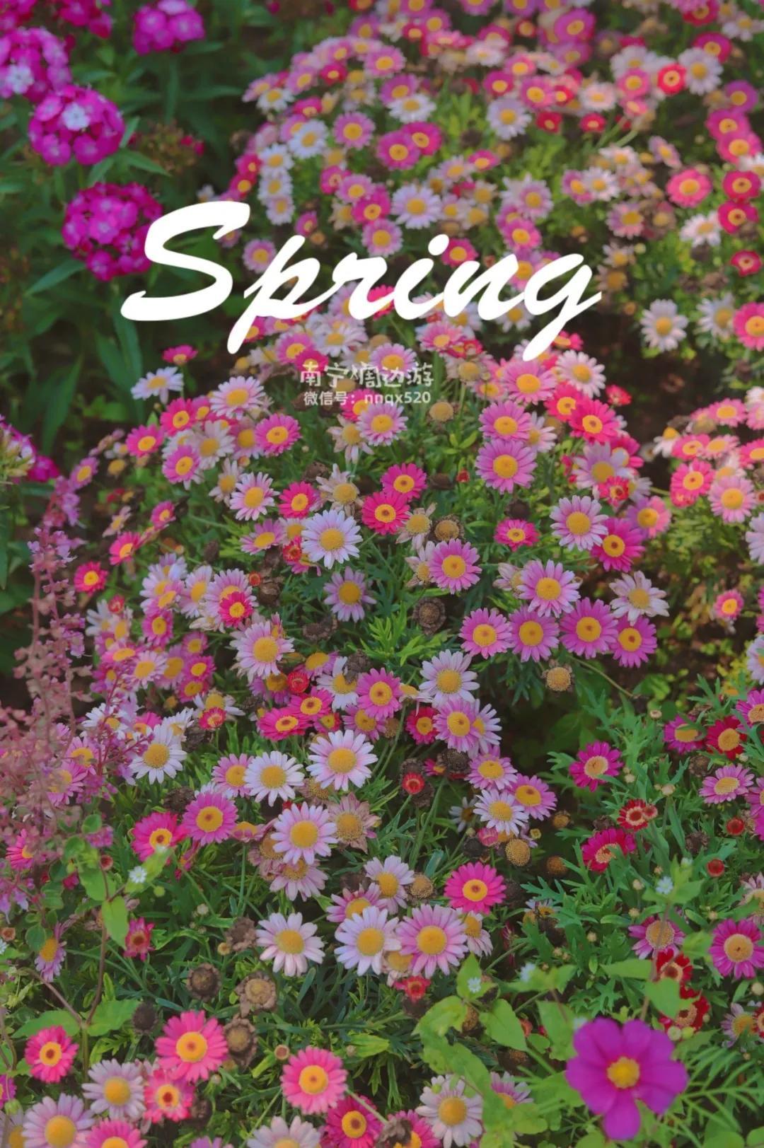 """南宁藏了超美的""""莫奈花园"""",鹅黄、奶白、粉红、紫红…赶紧去"""