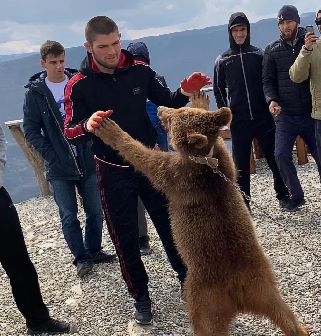 俄罗斯拳王哈比布与狮子拳击,与熊摔跤,但却被一只巨蟒吓得直跑