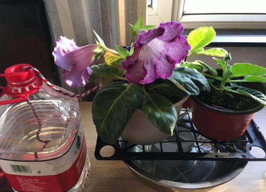 6个养花实用小窍门,业余爱好者的秘籍,养好花并不难 养花小窍门 第15张