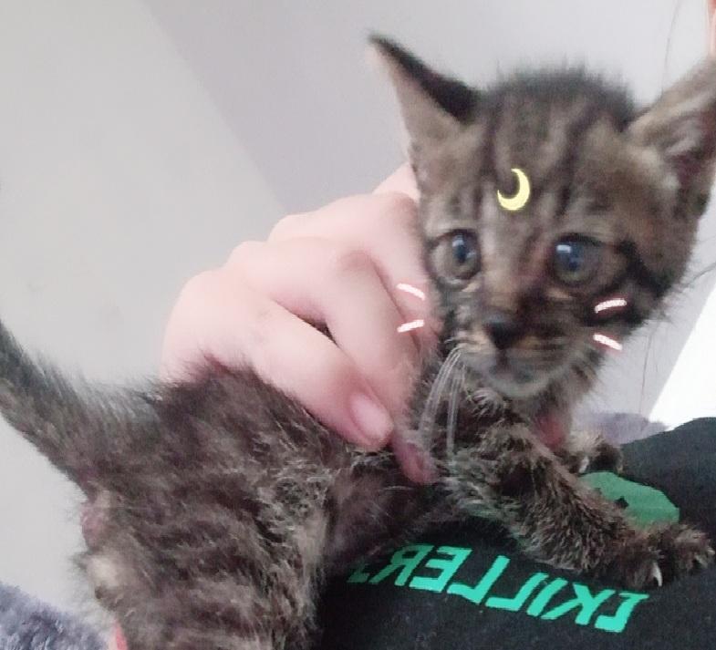 记一次收养流浪猫的经历,与小奶猫的缘分就此开始