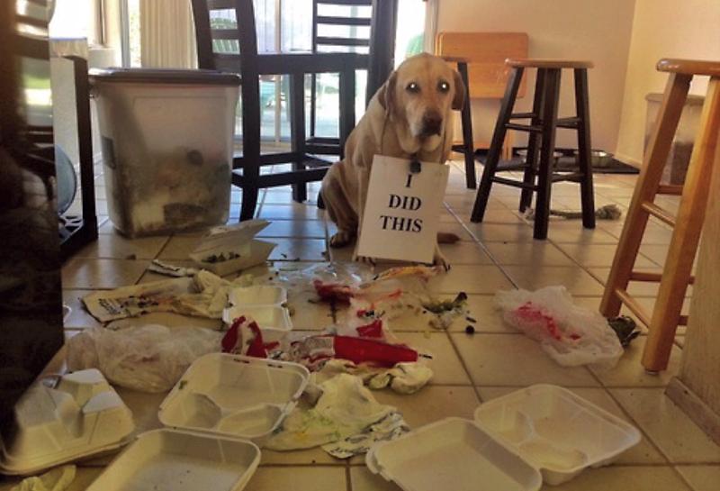 狗狗爱翻垃圾桶,不一定是拆家,可能是太想念主人了