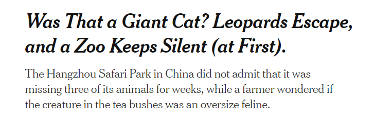 """【Vista世界派】杭州""""瞒豹""""背后:动物逃亡者们的下场"""