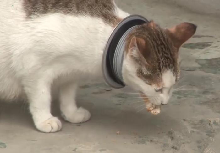 流浪猫头套铁环,执着于捡垃圾,好心人探查后发现了铁环的秘密