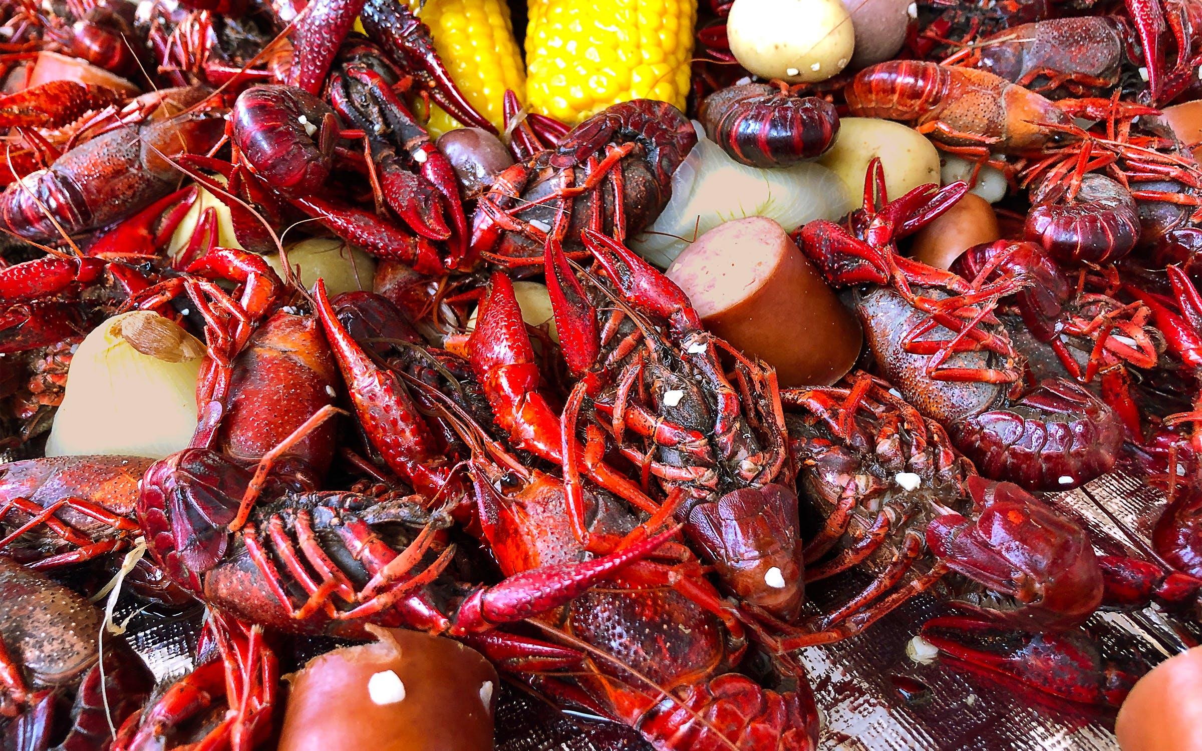 日本曾主动引进小龙虾,疑为处理尸体,为何现将其列为入侵物种?