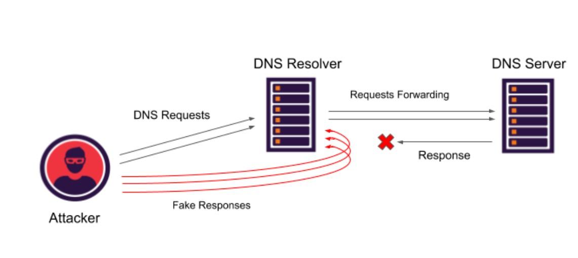DNS 的 5 �N攻�粜问胶���εe措