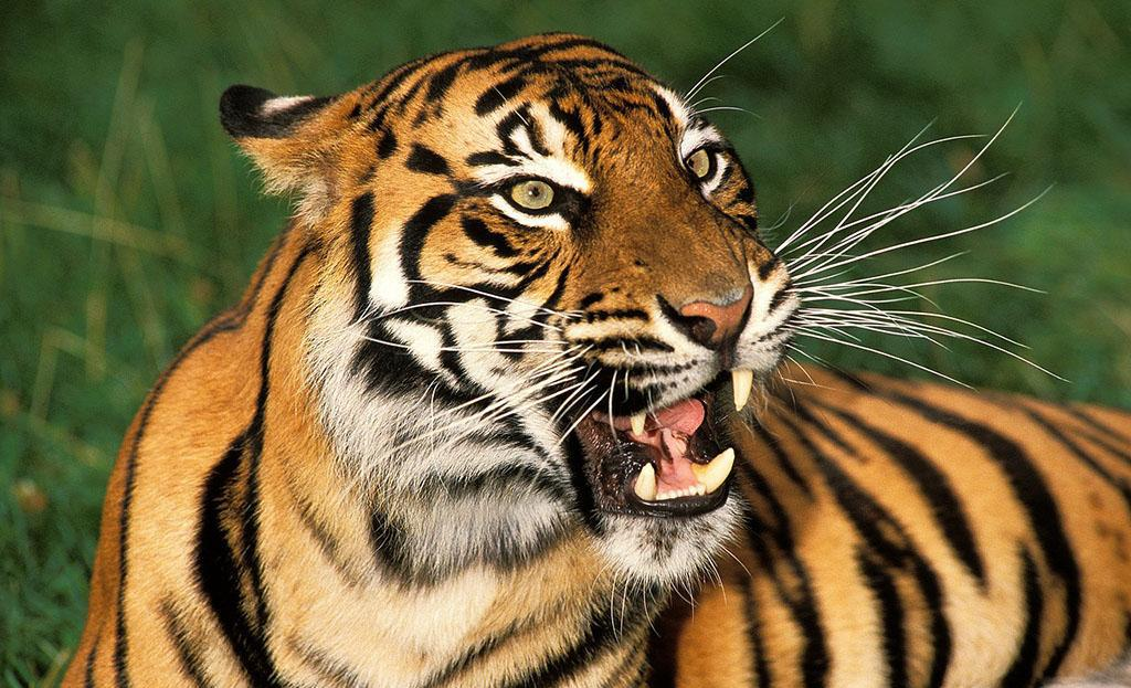 陆地上最凶猛的10大动物排行榜(下)